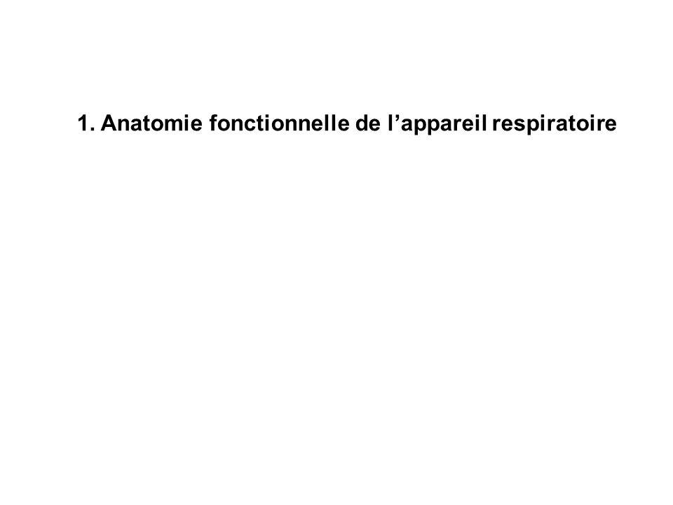 1. Anatomie fonctionnelle de l'appareil respiratoire