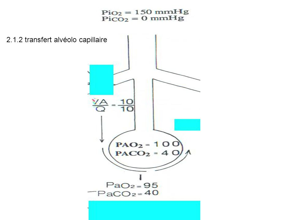 2.1.2 transfert alvéolo capillaire