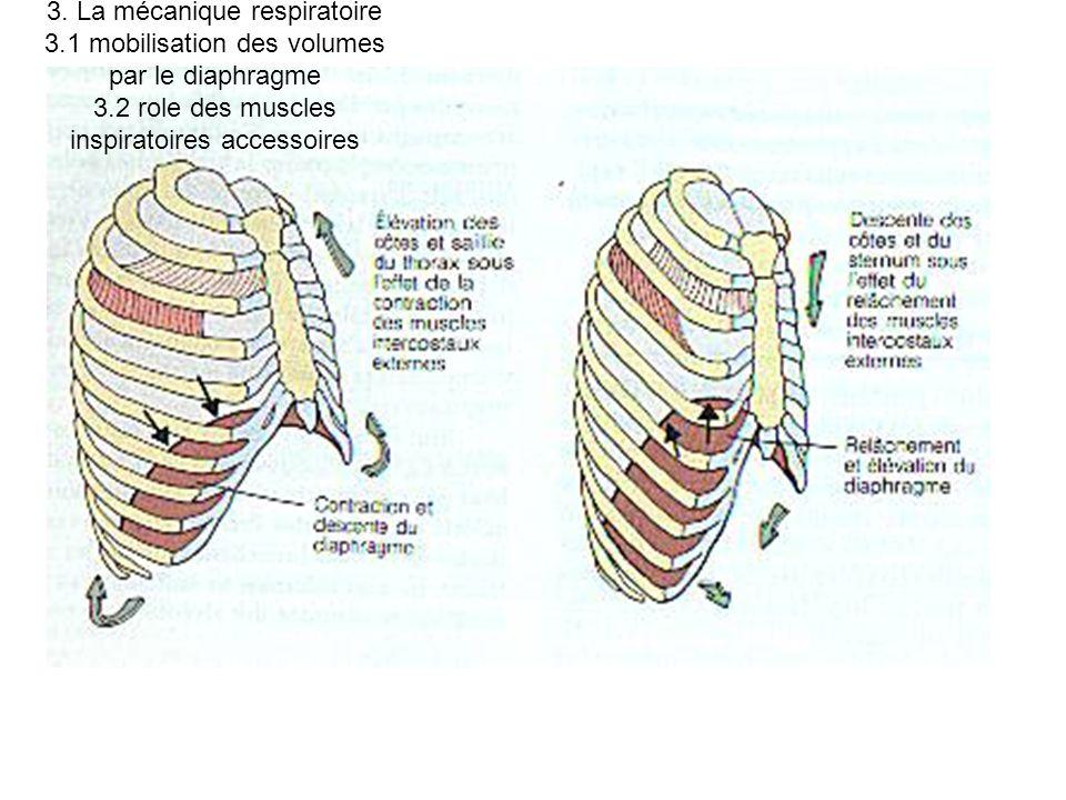 3. La mécanique respiratoire