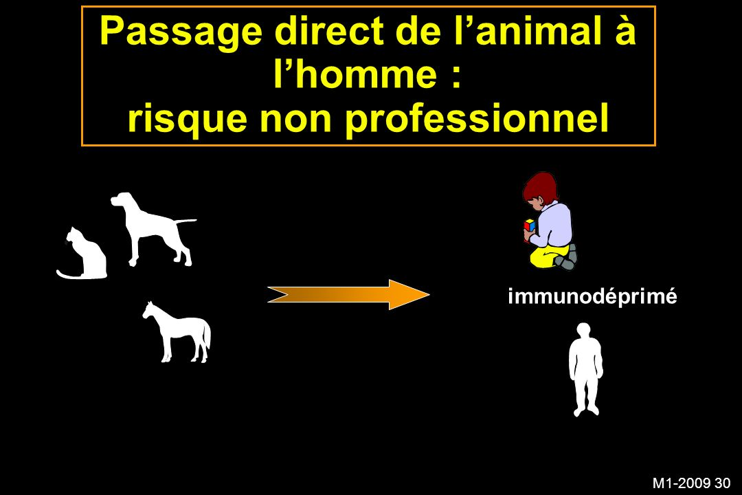Passage direct de l'animal à l'homme : risque non professionnel