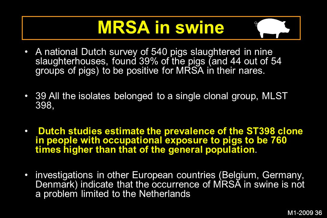 MRSA in swine