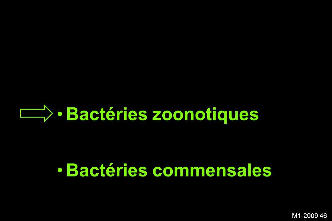 Bactéries zoonotiques