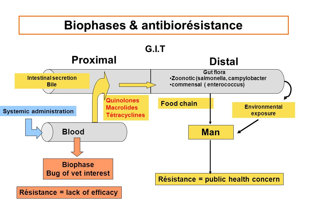 Biophases & antibiorésistance