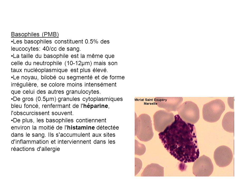 Basophiles (PMB) Les basophiles constituent 0.5% des leucocytes: 40/cc de sang.