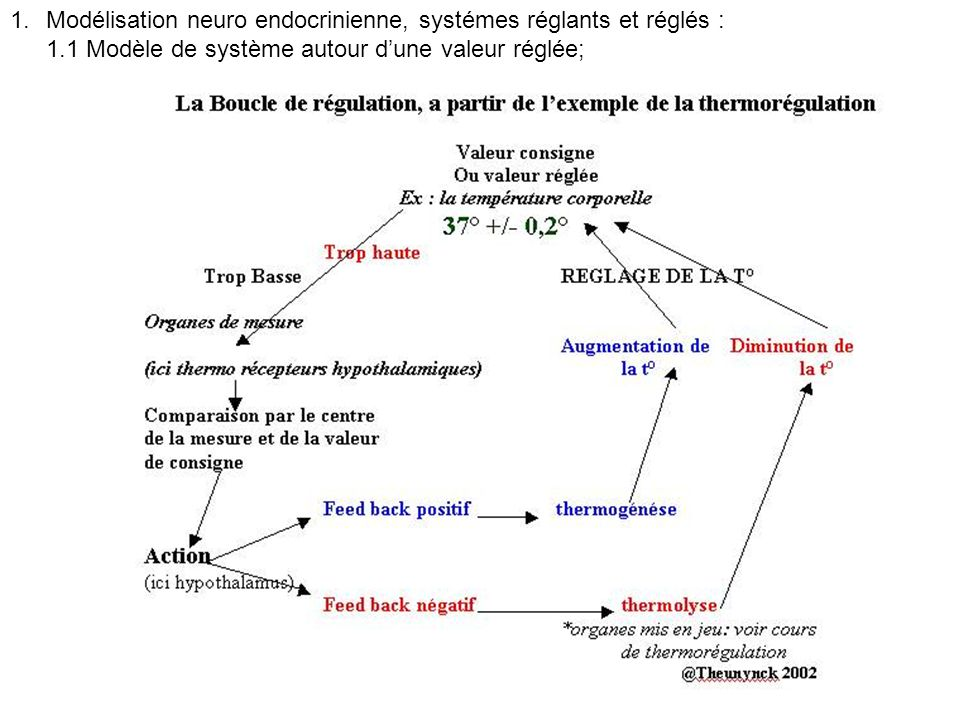 Modélisation neuro endocrinienne, systémes réglants et réglés :
