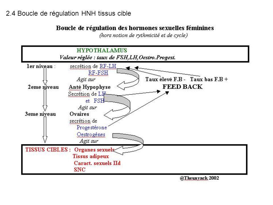 2.4 Boucle de régulation HNH tissus cible