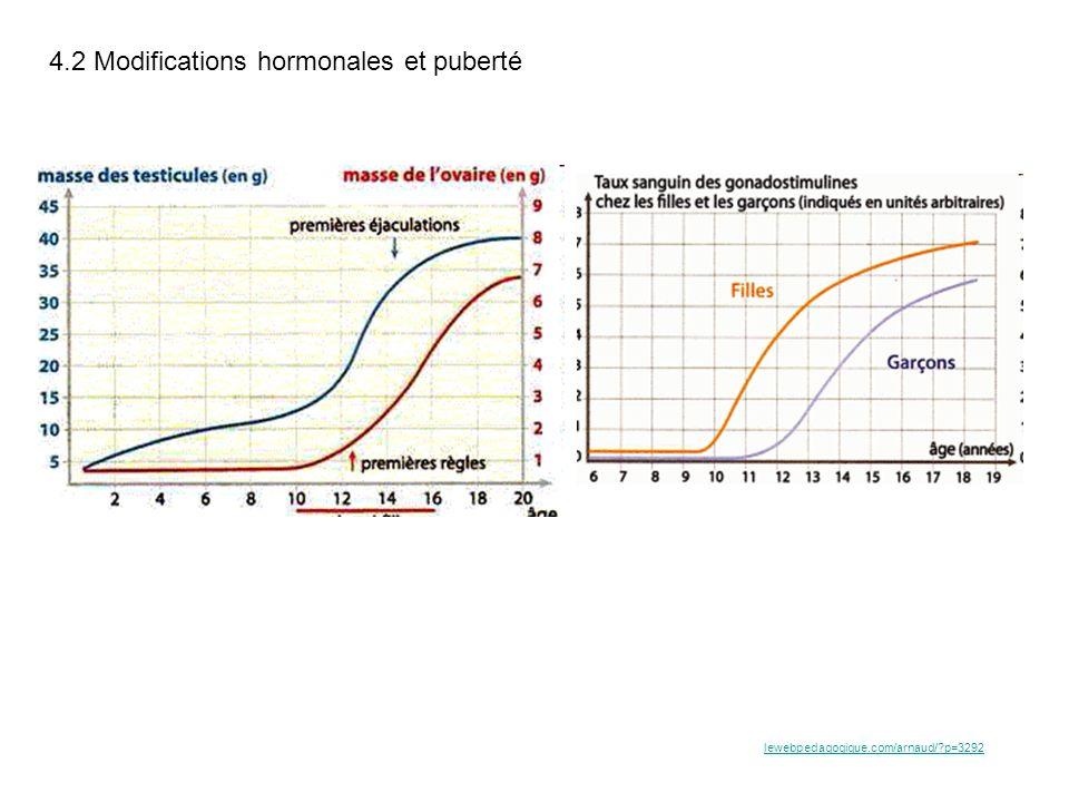 4.2 Modifications hormonales et puberté