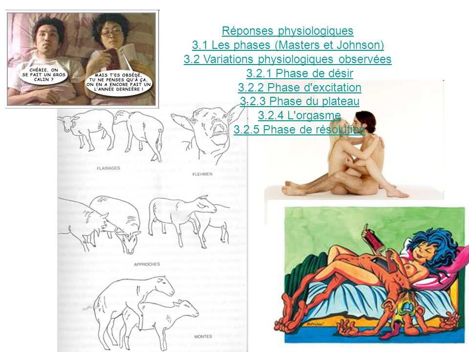 Réponses physiologiques 3.1 Les phases (Masters et Johnson)
