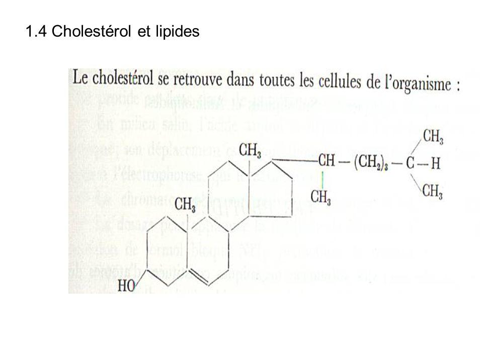 1.4 Cholestérol et lipides