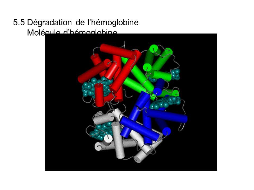 5.5 Dégradation de l'hémoglobine