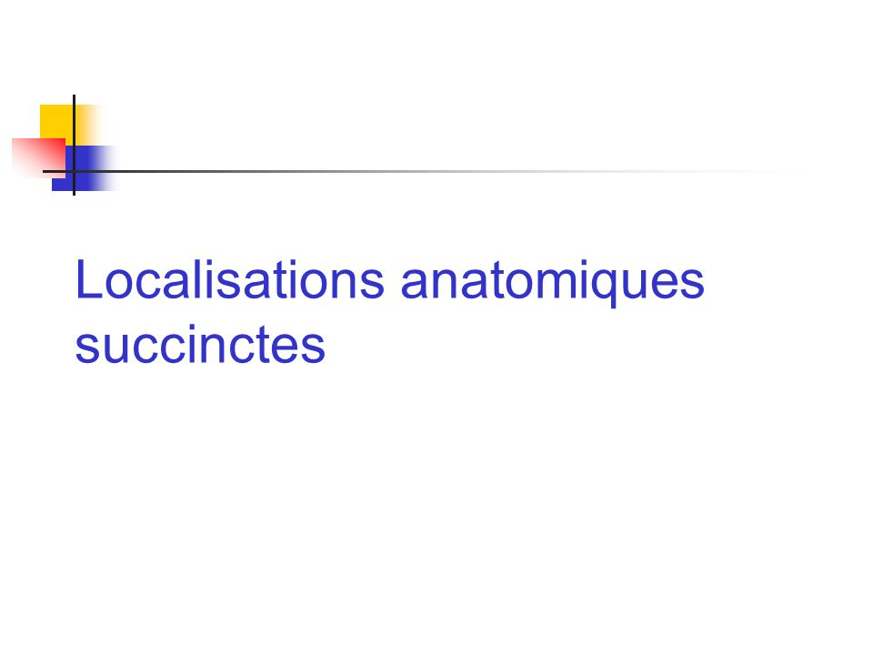 Localisations anatomiques succinctes
