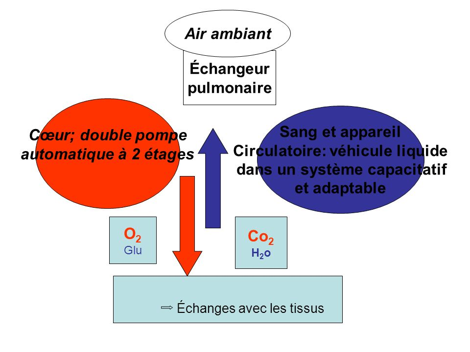 Circulatoire: véhicule liquide dans un système capacitatif