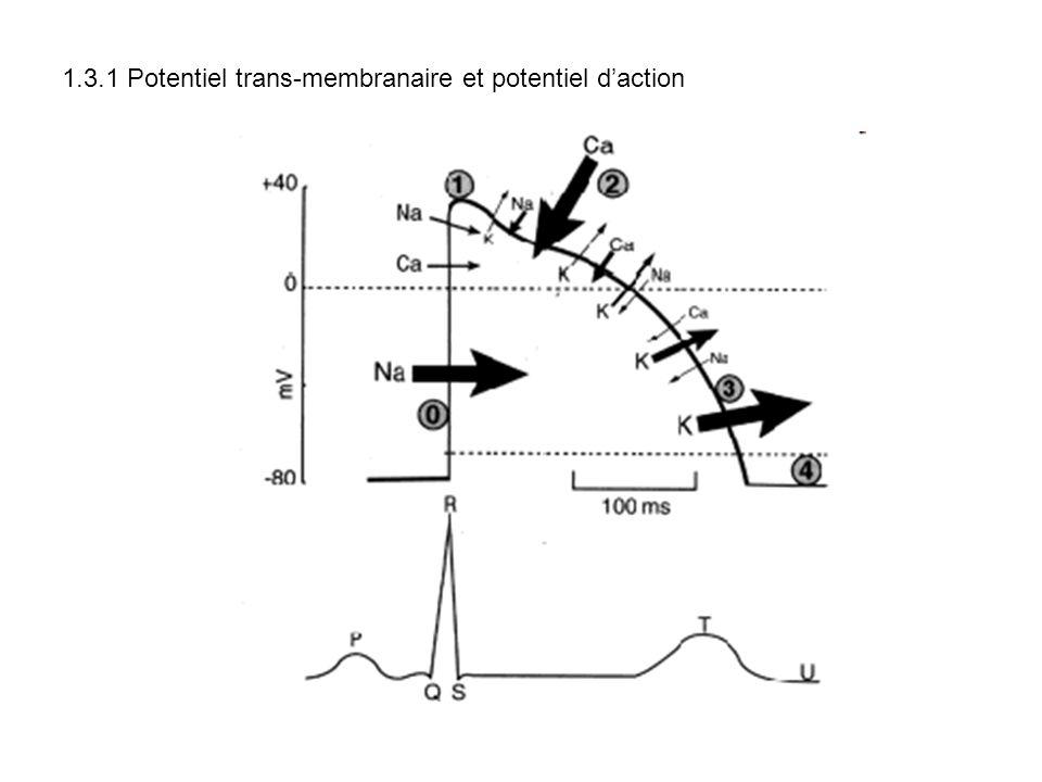 1.3.1 Potentiel trans-membranaire et potentiel d'action