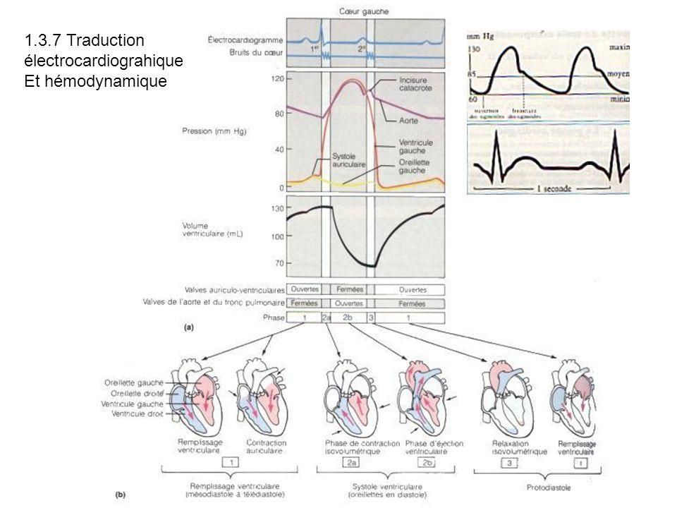 1.3.7 Traduction électrocardiograhique