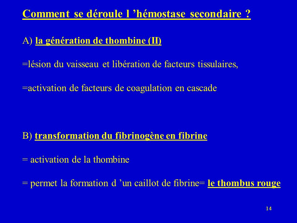 Comment se déroule l 'hémostase secondaire