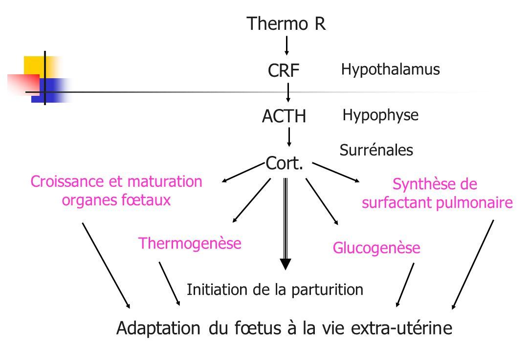 Adaptation du fœtus à la vie extra-utérine