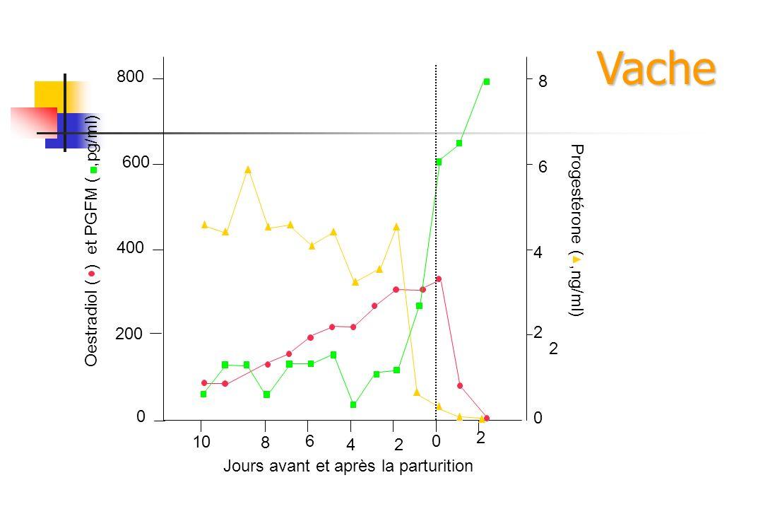 Vache 800 8 600 6 Oestradiol ( ) et PGFM ( ,pg/ml)