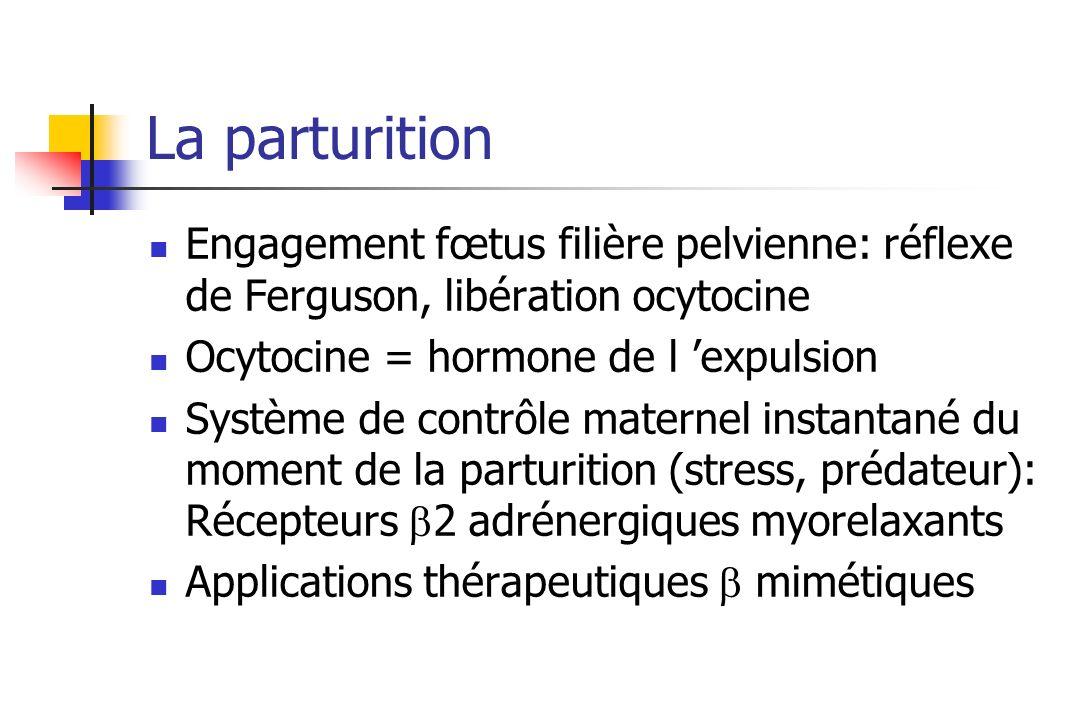 La parturition Engagement fœtus filière pelvienne: réflexe de Ferguson, libération ocytocine. Ocytocine = hormone de l 'expulsion.