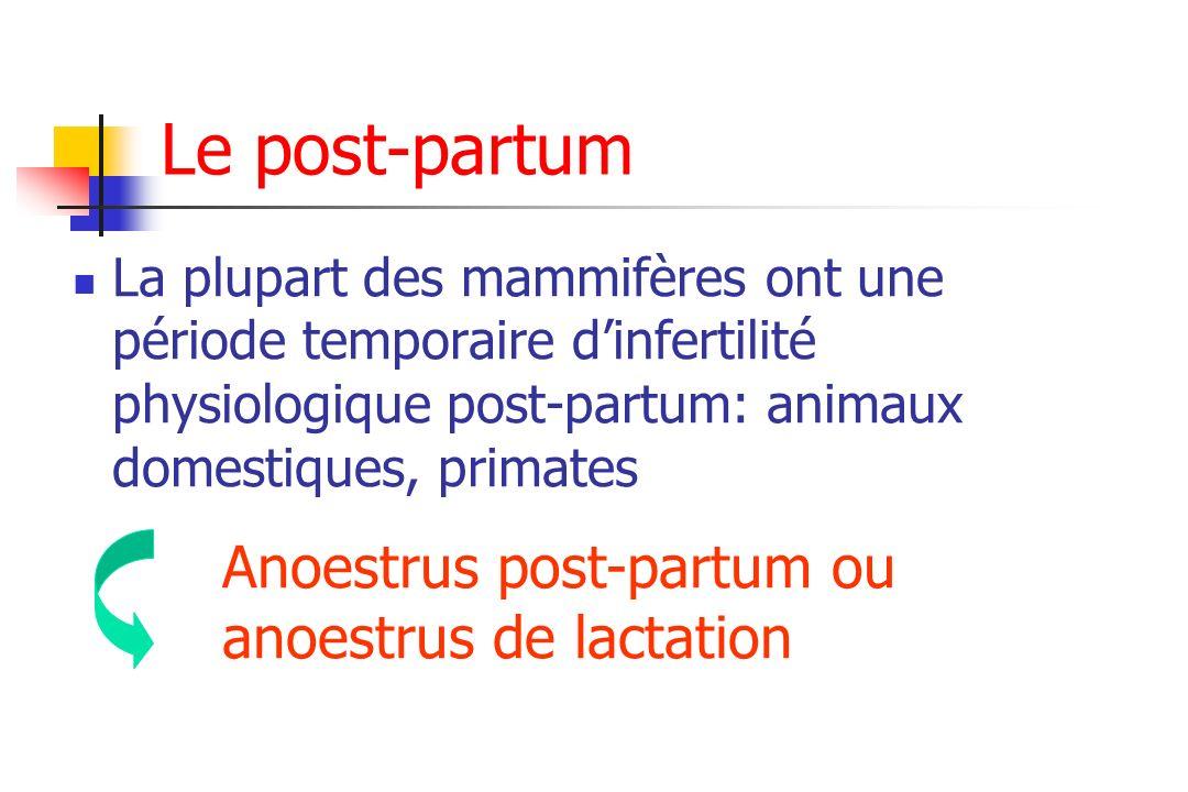 Le post-partum Anoestrus post-partum ou anoestrus de lactation