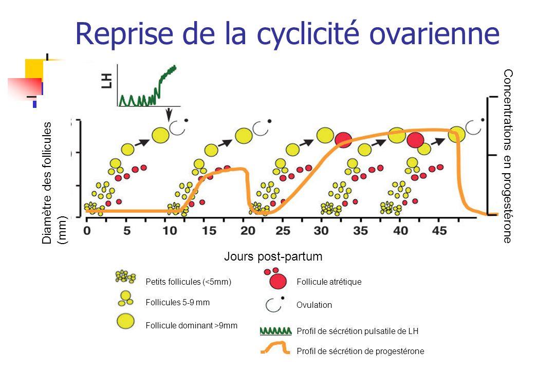 Reprise de la cyclicité ovarienne