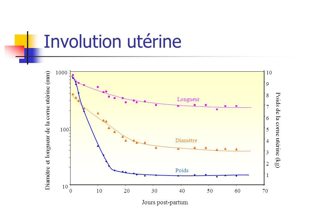 Involution utérine Diamètre et longueur de la corne utérine (mm)