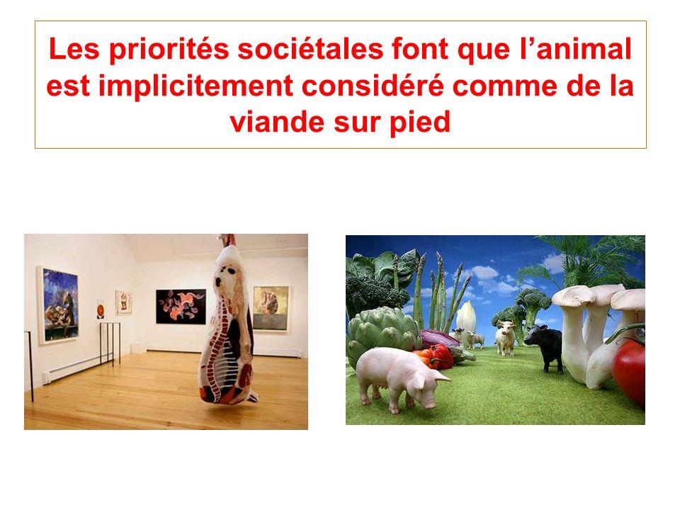 Les priorités sociétales font que l'animal est implicitement considéré comme de la viande sur pied