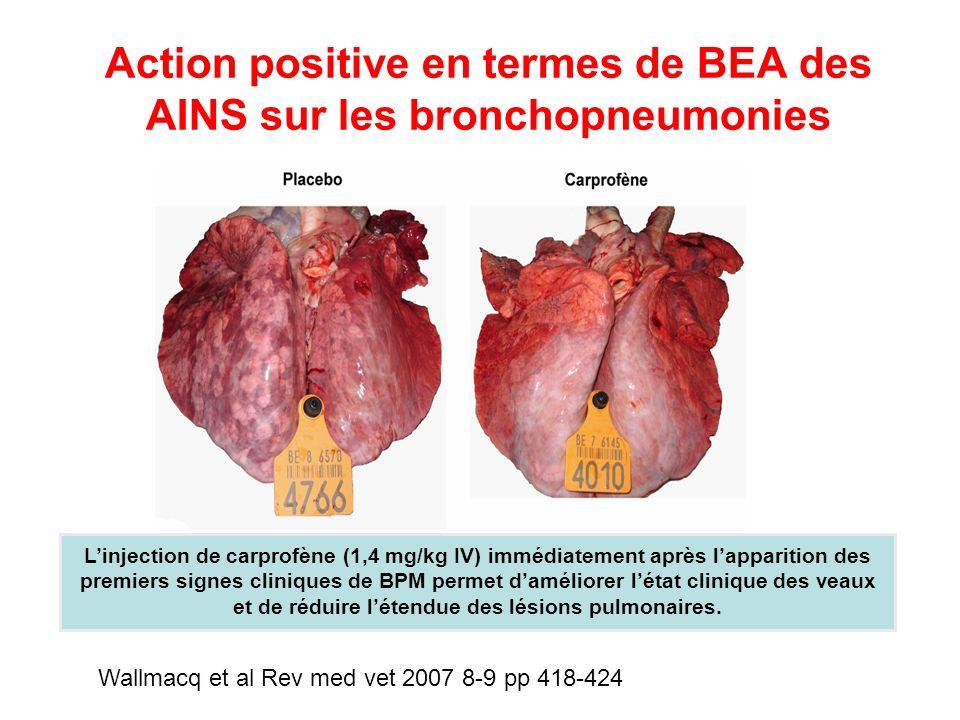 Action positive en termes de BEA des AINS sur les bronchopneumonies