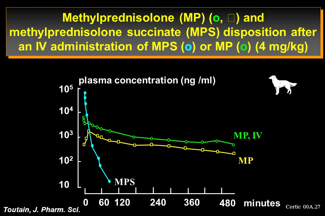 Methylprednisolone (MP) (o, ) and methylprednisolone succinate (MPS) disposition after an IV administration of MPS (o) or MP (o) (4 mg/kg)
