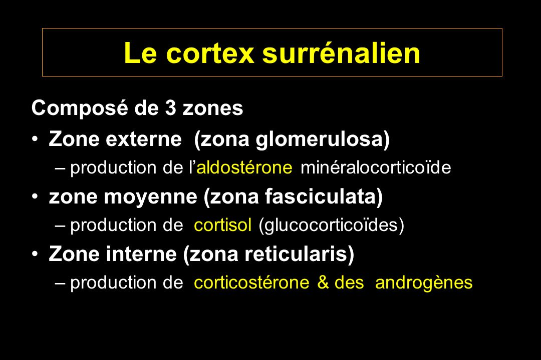 Le cortex surrénalien Composé de 3 zones