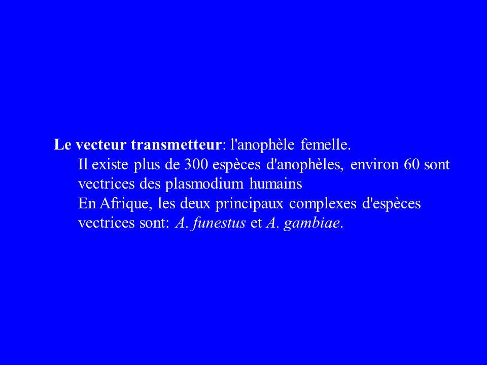Le vecteur transmetteur: l anophèle femelle.