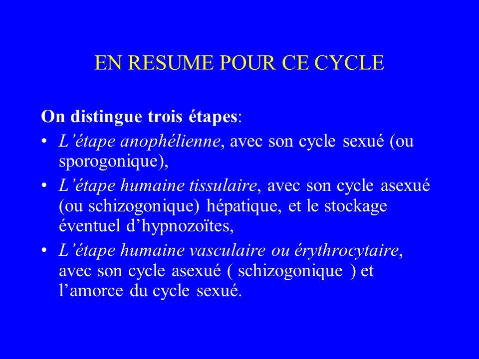 EN RESUME POUR CE CYCLE On distingue trois étapes: