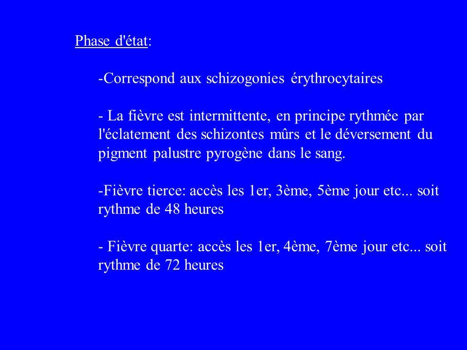 Phase d état: Correspond aux schizogonies érythrocytaires.