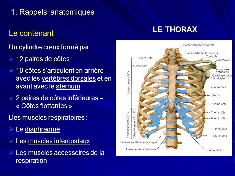 1. Rappels anatomiques LE THORAX Le contenant