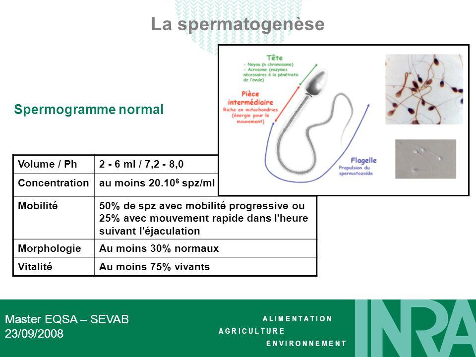 La spermatogenèse Spermogramme normal Master EQSA – SEVAB 23/09/2008