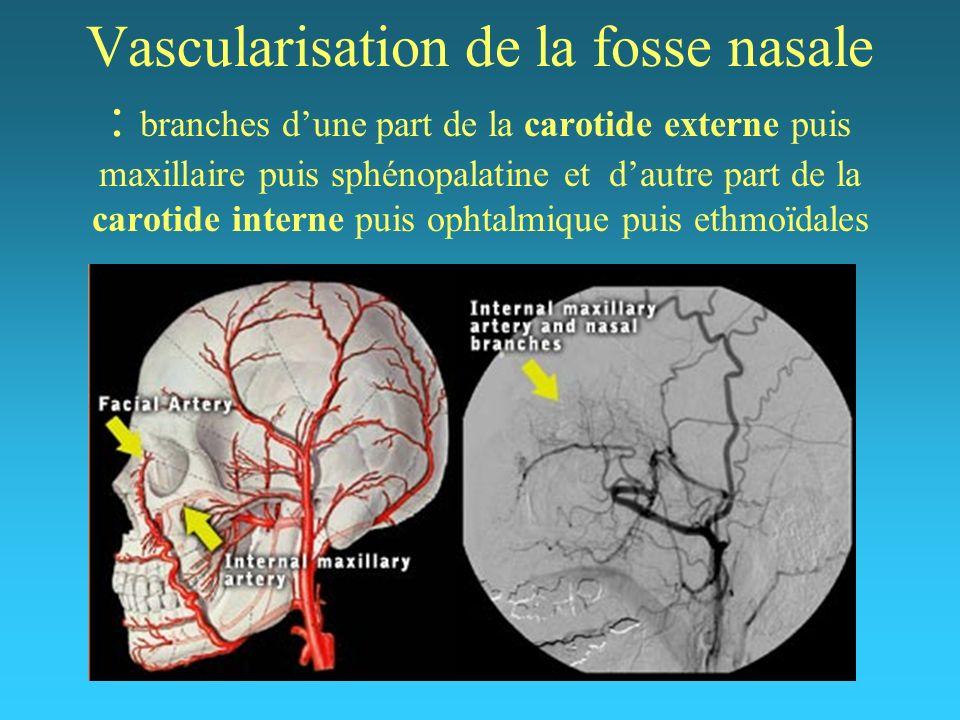 Vascularisation de la fosse nasale : branches d'une part de la carotide externe puis maxillaire puis sphénopalatine et d'autre part de la carotide interne puis ophtalmique puis ethmoïdales