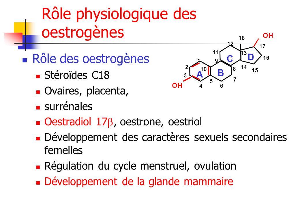 Rôle physiologique des oestrogènes