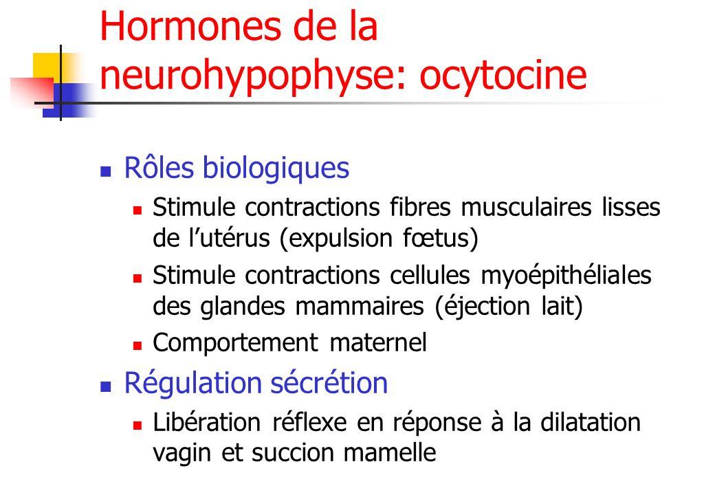 Hormones de la neurohypophyse: ocytocine