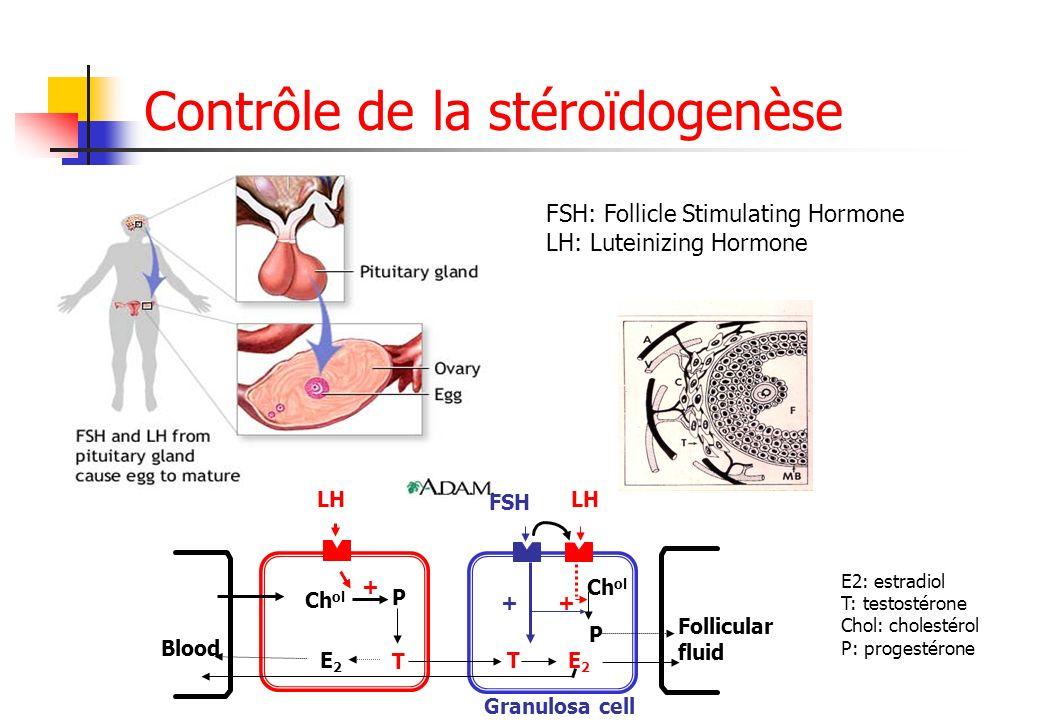 Contrôle de la stéroïdogenèse