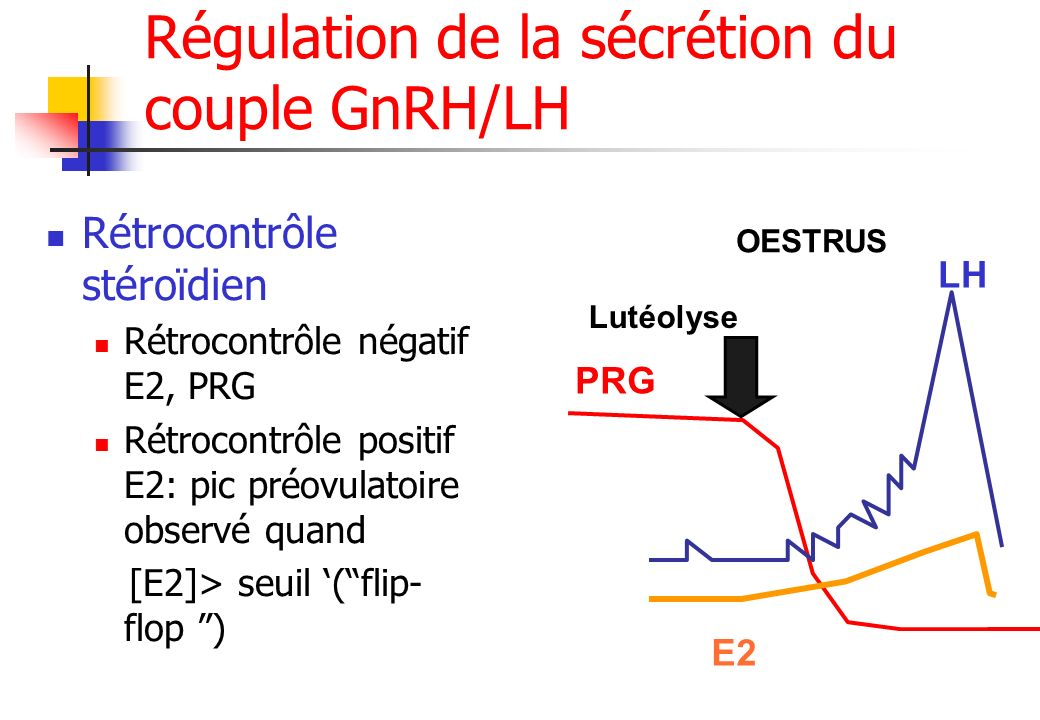 Régulation de la sécrétion du couple GnRH/LH