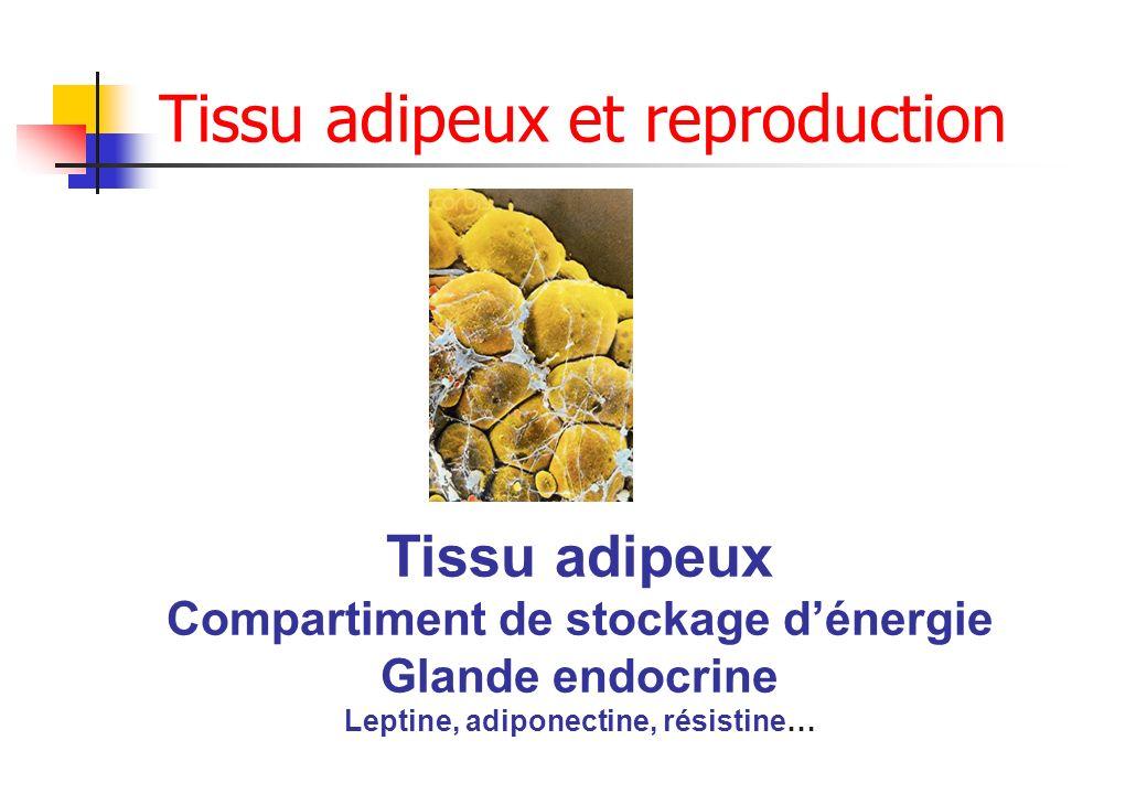 Tissu adipeux et reproduction