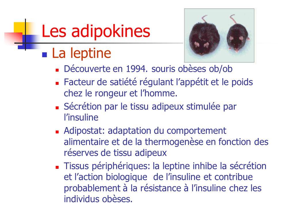 Les adipokines La leptine Découverte en 1994. souris obèses ob/ob