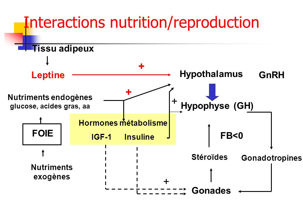 Interactions nutrition/reproduction