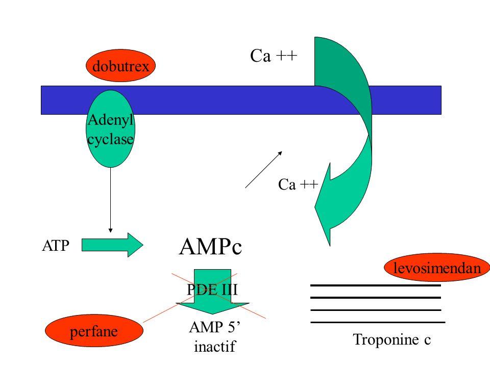 AMPc Ca ++ dobutrex Adenyl cyclase Ca ++ ATP levosimendan PDE III