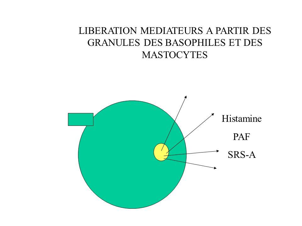 LIBERATION MEDIATEURS A PARTIR DES GRANULES DES BASOPHILES ET DES MASTOCYTES