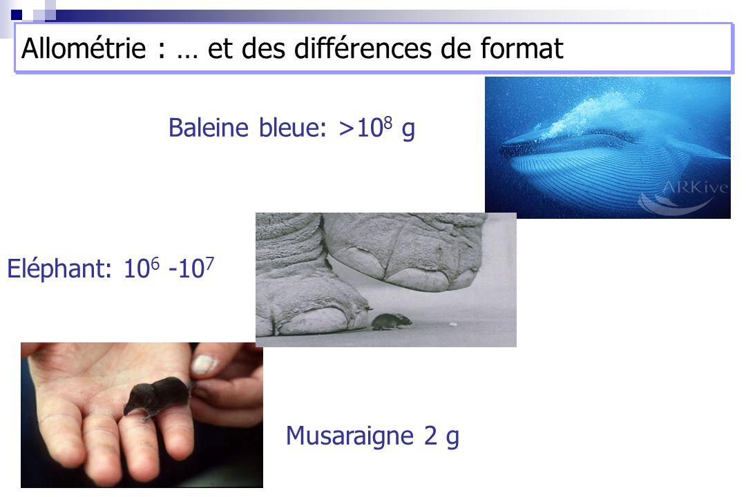 Allométrie : … et des différences de format