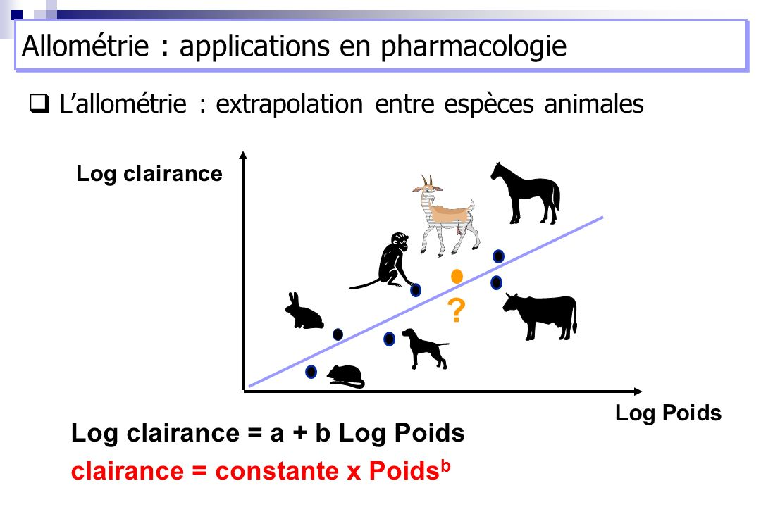 Allométrie : applications en pharmacologie