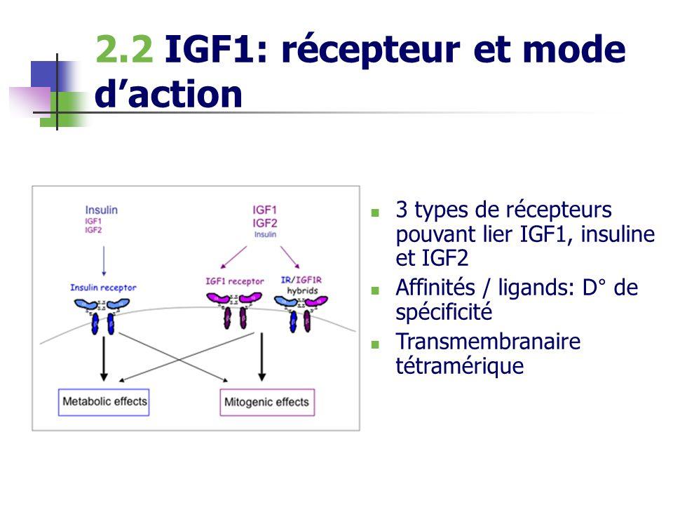 2.2 IGF1: récepteur et mode d'action