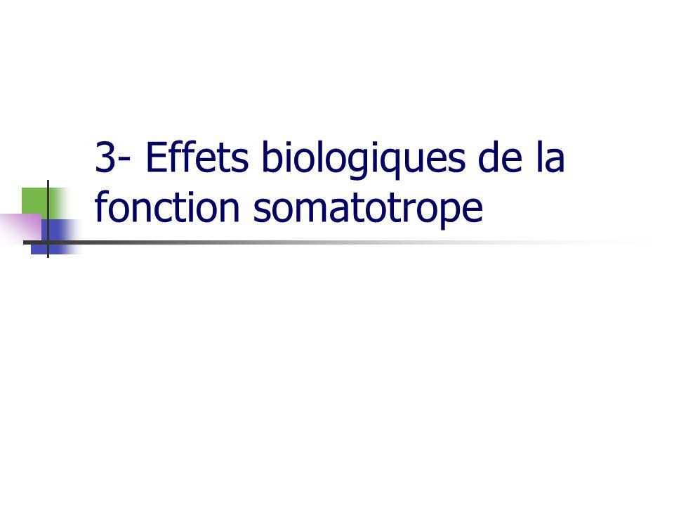 3- Effets biologiques de la fonction somatotrope