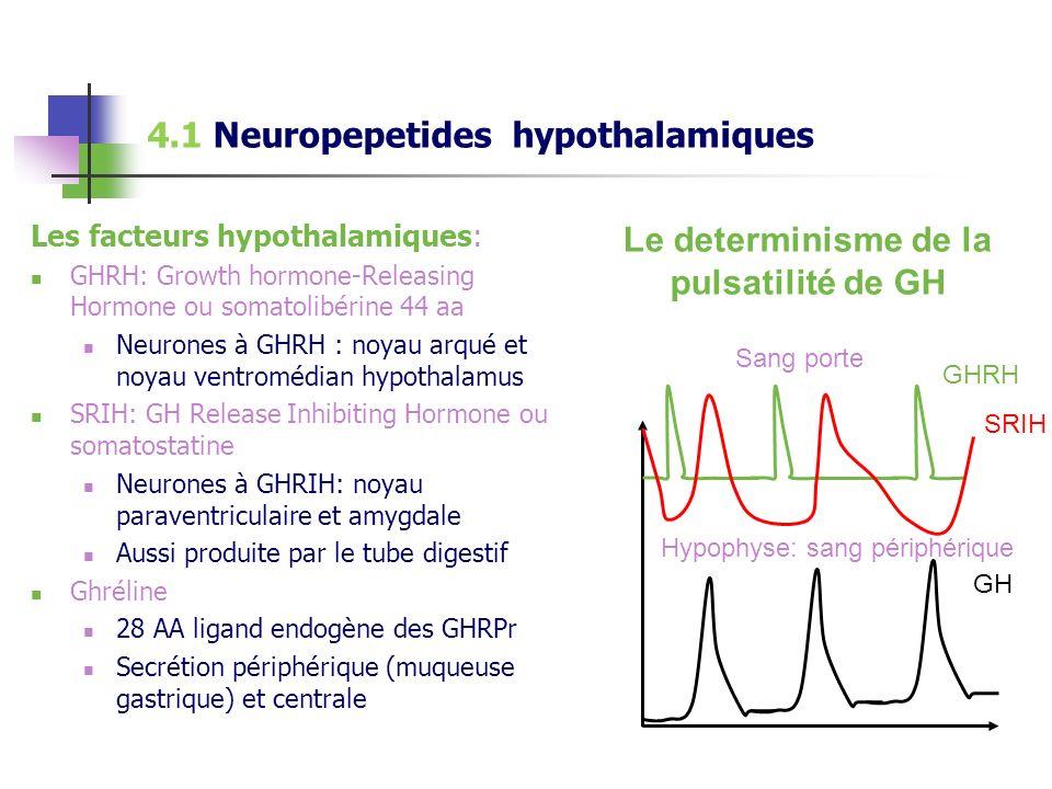 Le determinisme de la pulsatilité de GH
