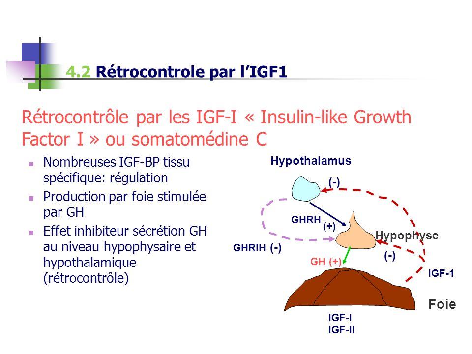 4.2 Rétrocontrole par l'IGF1